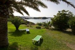 Sun loungers under en palmträd Arkivbilder