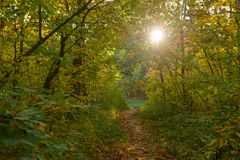 Sun makes its way through the leaves in the autumn forest. With a path Stock Image
