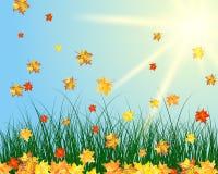 Sun meadow Stock Photo