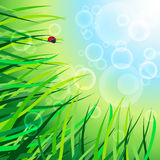 Sun meadow. EPS 10 Green bokeh abstract light background Stock Images