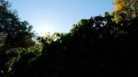 Sun mira hacia fuera de detrás los arbustos Evaporación de la mañana en el árbol almacen de metraje de vídeo