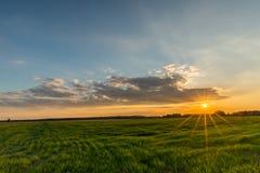 Sun mit Strahlen über der Wiese mit Gras Stockfotos
