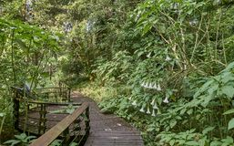 At Sun Moon Lake Taiwan there are many paths in the forest and