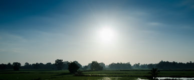The sun in the morning. Royalty Free Stock Images