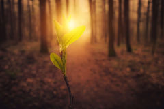 Sun in morning forest Stock Photo