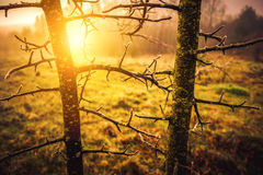 Sun in morning forest field Stock Image