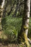 Sun moss grass trunk Stock Images