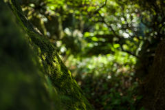 Sun and moss. In Japan Royalty Free Stock Image