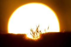 Sun moss Stock Photos
