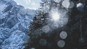 Sun through mountain pine trees Stock Photo