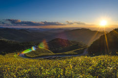 Sun ,mountains,tTung  Bua Tong,thailand,Evening ligh Royalty Free Stock Image
