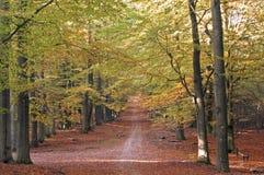 Sun na floresta do outono Imagem de Stock Royalty Free