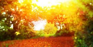 Sun na floresta do outono Imagem de Stock