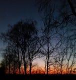 Sun na manhã Fotografia de Stock Royalty Free