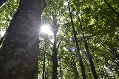 Sun nas árvores fotografia de stock