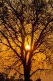 Sun nas árvores Foto de Stock