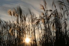 Sun, Nature, Sea Grass, Sky, Clouds Royalty Free Stock Images