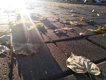 Sun near ground under pavement with dropped leaves. City sun rising. stock photo