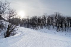 An empty ski run through bare trees stock images