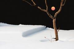Sun nell'inverno Immagini Stock