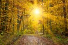 Sun nella foresta del autmn Fotografia Stock Libera da Diritti