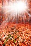 Sun nella foresta di autunno Immagini Stock
