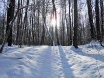 Sun nella foresta di inverno fotografia stock