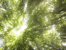 Sun nelle cime dell'albero Fotografia Stock Libera da Diritti