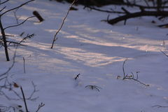 Sun & neve na floresta Imagem de Stock Royalty Free