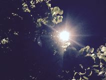 Sun of the night royalty free stock images