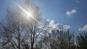 Sun no dia Imagens de Stock Royalty Free