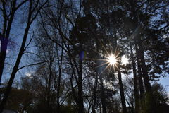 Sun no outono fotos de stock