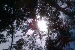 Sun o un árbol Fotos de archivo