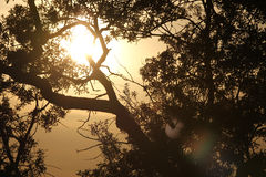 Sun through the oak trees II. Sun is scorching through an oak tree on a hot summer day royalty free stock photography