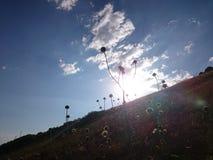 Sun och blommor Royaltyfri Foto