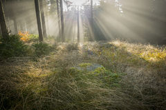 Sun och dimma Royaltyfri Foto