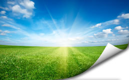 Sun och för green field nytt gräs etiketten för den blåa skyen Arkivfoton