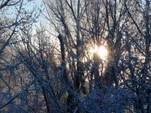 Sun och Snow Arkivfoto