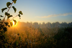 Sun och spiderweb Arkivbild