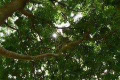 Sun och tree arkivfoton