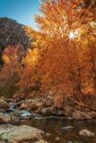 Sun Through the Orange Royalty Free Stock Images