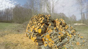 Sun on orange tree logs, time lapse 4K. Sun shining on freshly cut orange alder firewood by the forest in early spring, time lapse 4K stock video