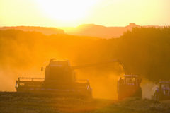 Sun over combine harvesting wheat and filling trailer in rural field Royalty Free Stock Photo