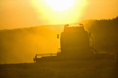 Sun over combine harvesting wheat in rural field Royalty Free Stock Photo