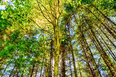 Sun over fall foliage. Yellow and green leaves over a blue sky in autumn Royalty Free Stock Images
