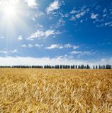 Sun over field Royalty Free Stock Photos