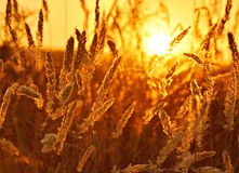 Sun over field Stock Photography