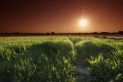 Sun over field Royalty Free Stock Images