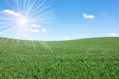Sun over field Royalty Free Stock Photo