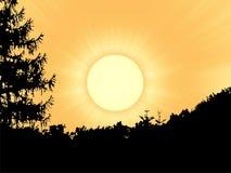 Sun over forest Stock Photos